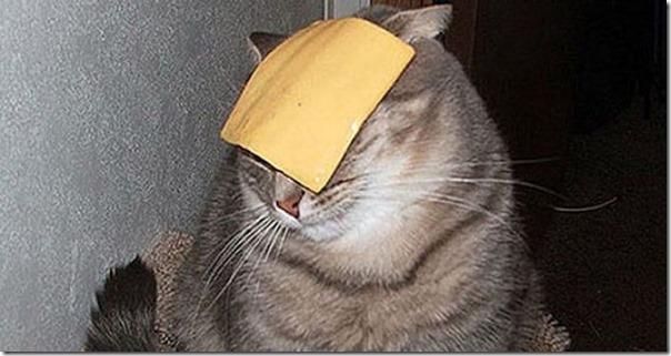 cat-cheese-challenge-e1552902324692