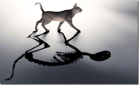 deathcat_small