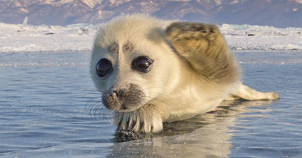 2018-11-09 16_52_54-baby seal - Google Search.png