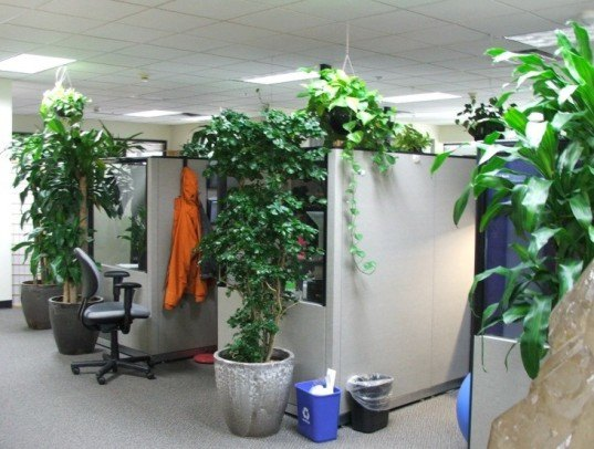 office plants.jpg