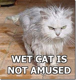 1.wet.cat.is.not.amused[1]