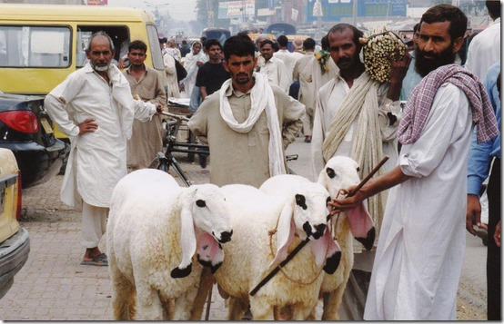 pakistan-2004.1098179760.shepherd