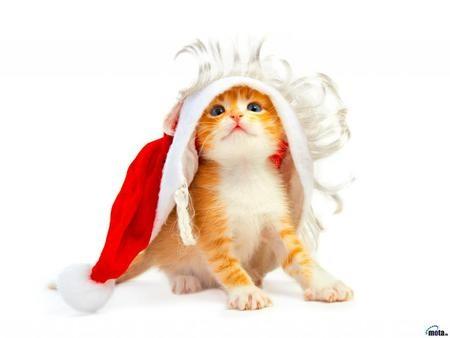 santa-kitten