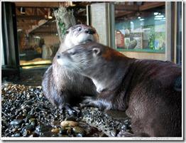 aquarium-otter-friends-large