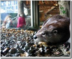 aquarium-otter-w-kids-in-background-large