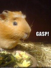 funny-pictures-gasp-hamster