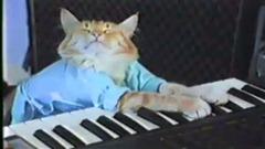 keyboardcat