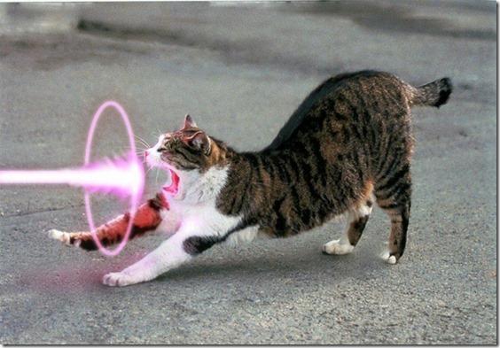 cats%20purple%20lasers_www.wall321.com_60[1]