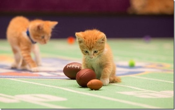 Kitten-Bowl-Boomer-Esiason-Commissioner[1]
