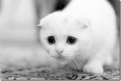 Sad-Cat[1]