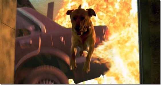 independence-day-dog-avoids-explosion[1]