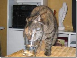 stupid_cat