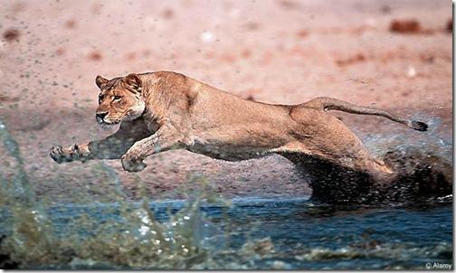 lions-lol