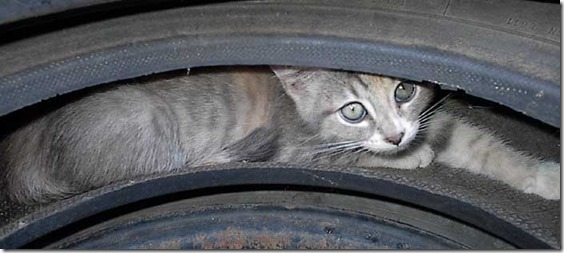 kitten_tire3[1]