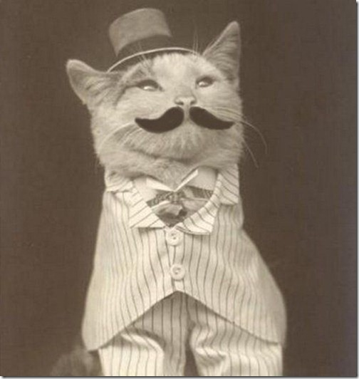 cat-handsome-mustache-Favim.com-415230_large[1]