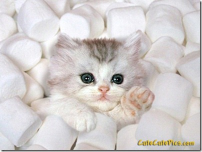cute-kitten-marshmellows_large[1]