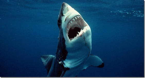 101202-great-white-shark-hmed-755a[1]