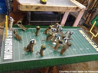 Chipmunk-Football_0[1]