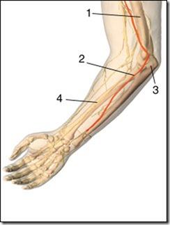ulnar-nerve[1]