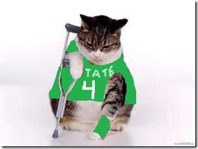 cat4[1]