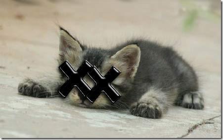 dead-kitten_01