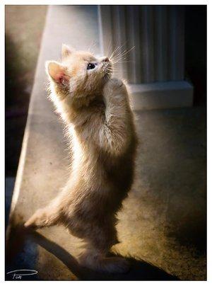 Praying_Kagura_pt__II_by_Photo_Cap[1]