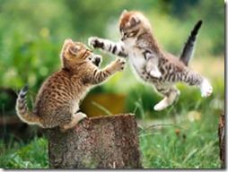 cat-fight[1]