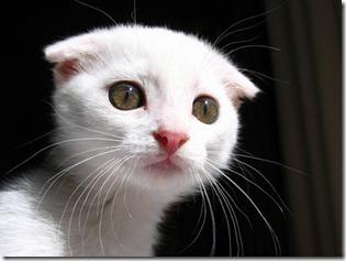 kitten-does-not-like