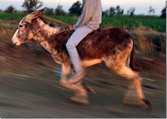 ss-160211-jumping-donkey-06_887e70c3222eed9f4a3c64fb07b067a7.nbcnews-ux-1024-900